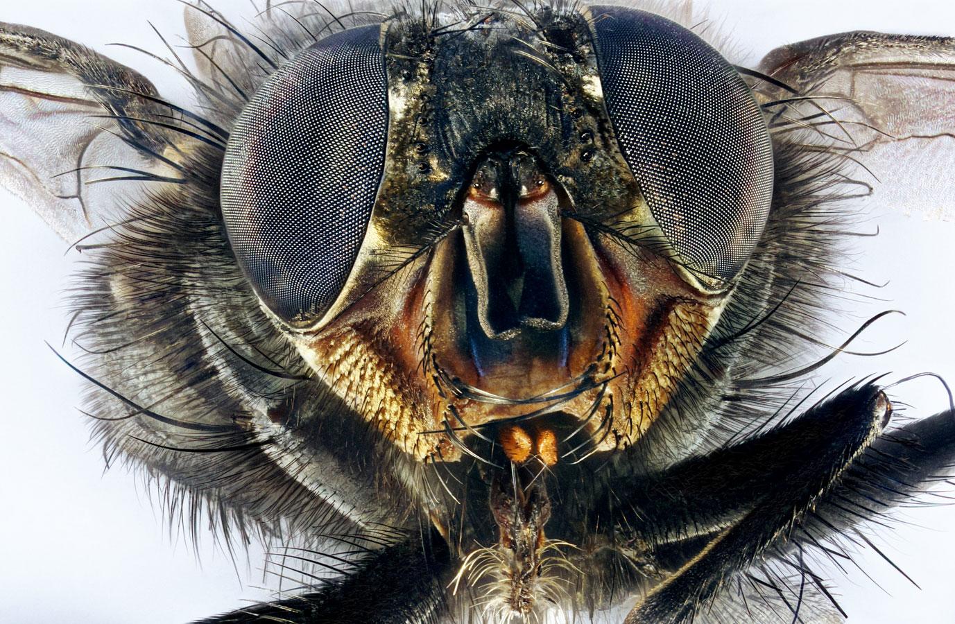Категория «Микроизображения», © Retro Lenses, Победитель, Конкурс научных фотографий «Снимай науку»