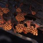Категория «Серия изображений», © Алексей Захаринский, II место, Конкурс научных фотографий «Снимай науку»