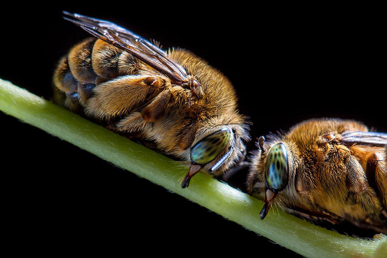 Ночевка пчел, © Стойко Саботанов, Конкурс научных фотографий «Снимай науку»