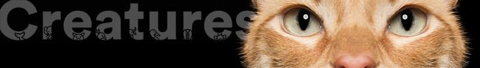 Фотоконкурс животных «Создания» — Creatures