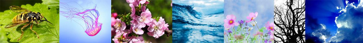 Фотоконкурс «Глубина в природе» — Depth In Nature