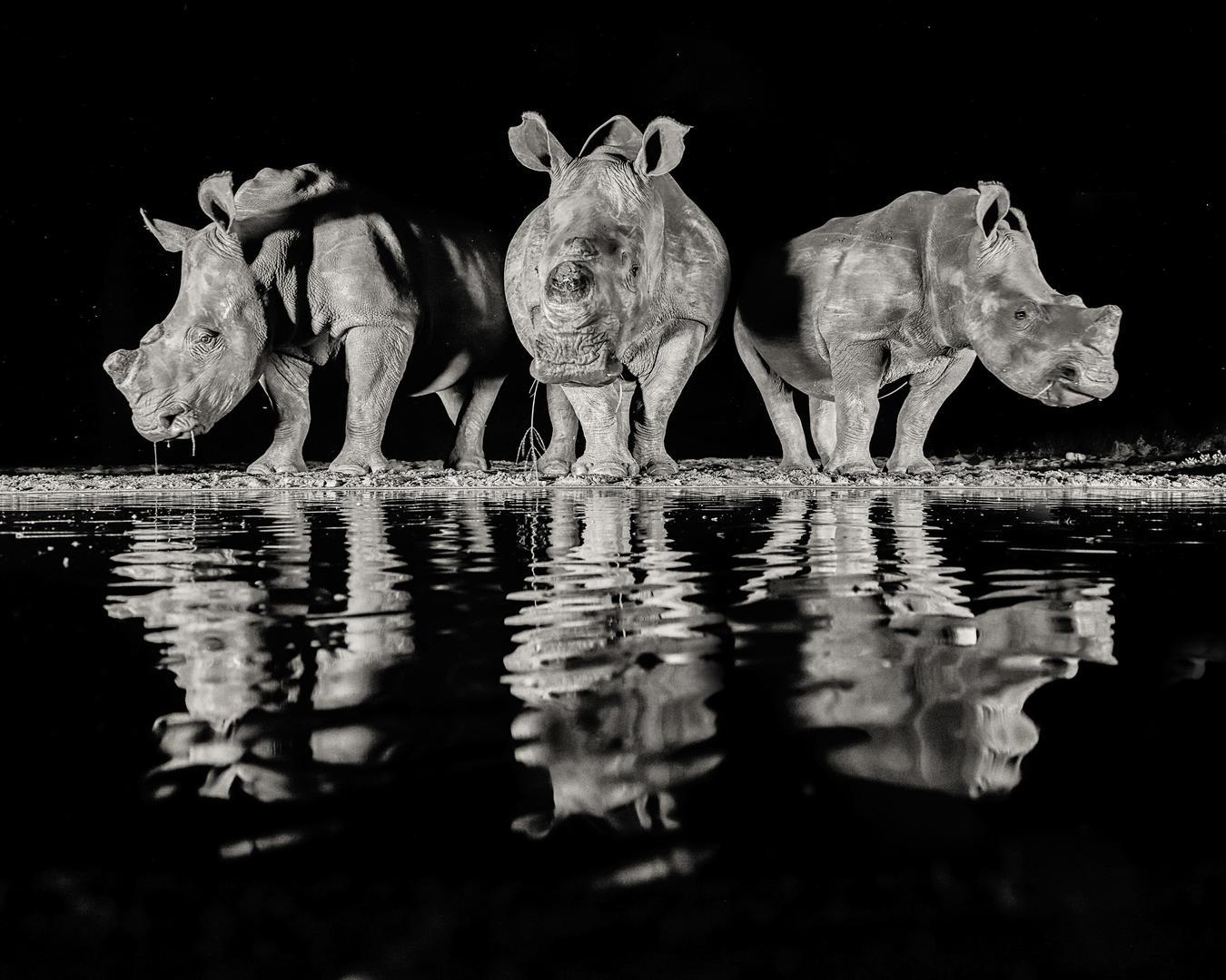 Три белых носорога № 2, © Алан Смит, 2-е место, Фотоконкурс «Фотограф года от Digital Camera»