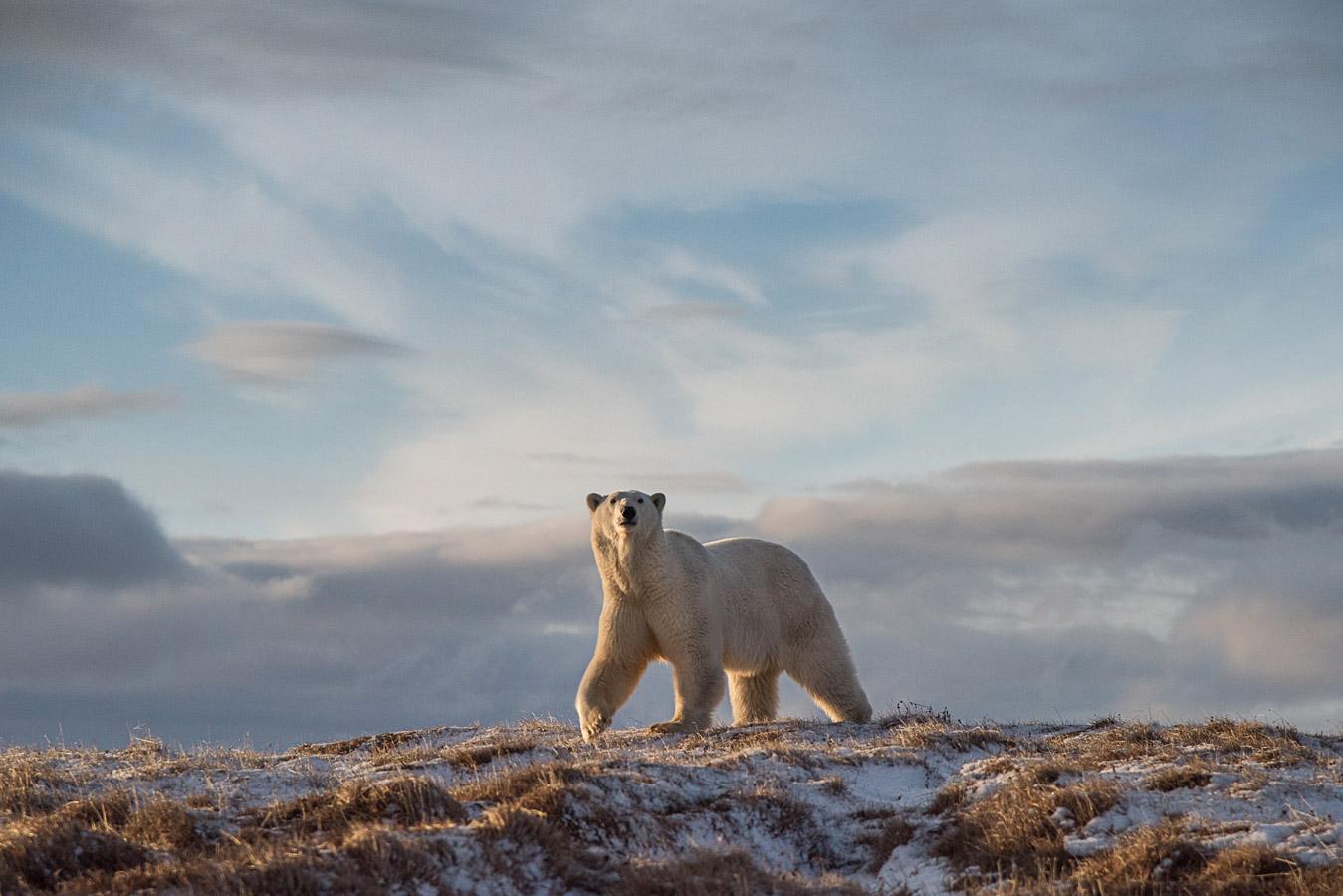 Прогулка, © Виталий Дворяченко, 1-е место в номинации «Млекопитающие», Победитель фотоконкурса «Дикая природа России – 2018», Фотоконкурс «Дикая природа России» от National Geographic