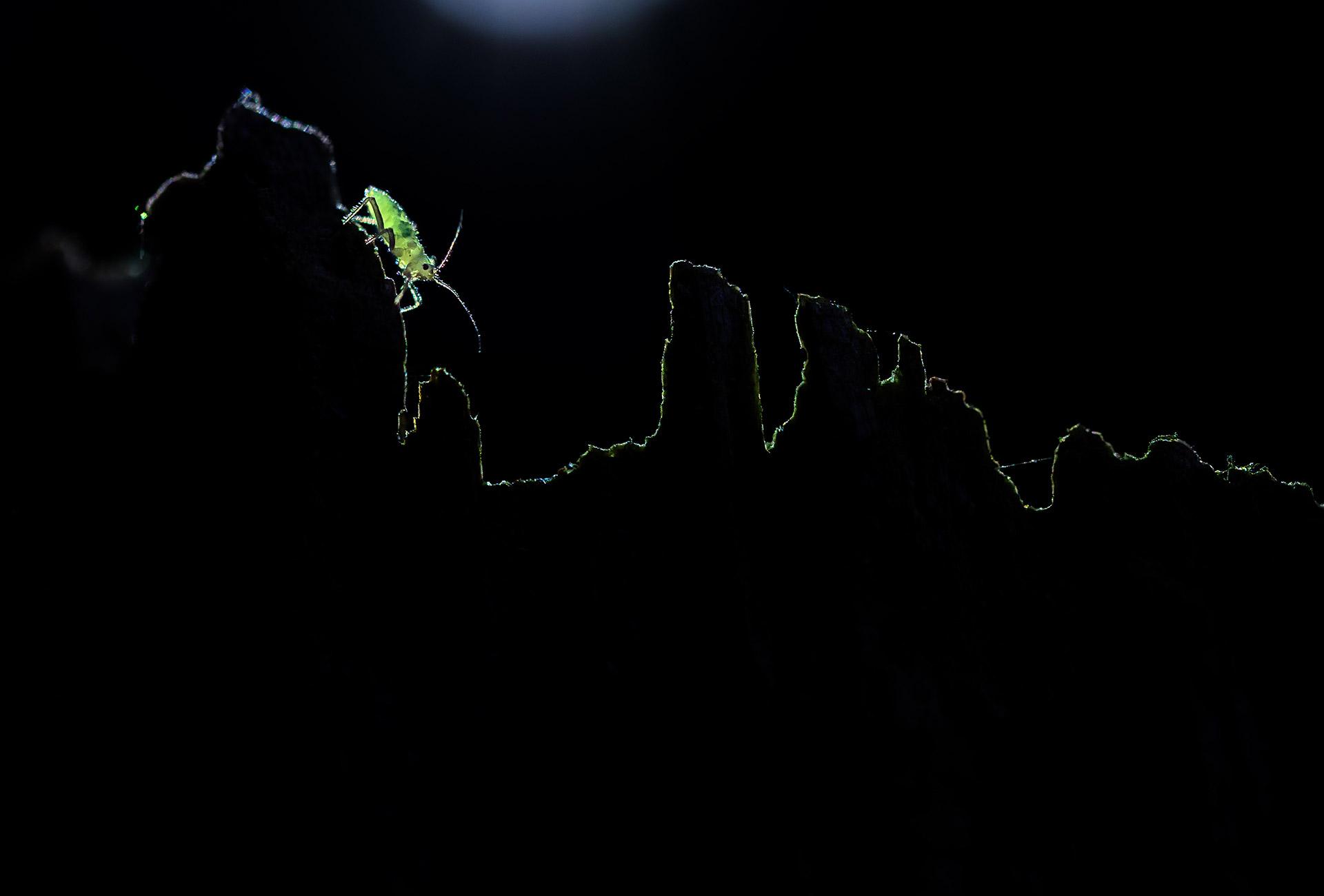Скалолазка, © Валерия Зверева, 1-е место в номинации «Макросъёмка», Фотоконкурс «Дикая природа России» от National Geographic