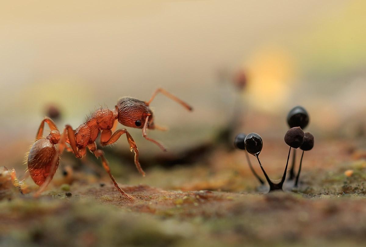 По грибы, © Валерия Зверева, 2-е место в номинации «Макросъёмка», Фотоконкурс «Дикая природа России» от National Geographic
