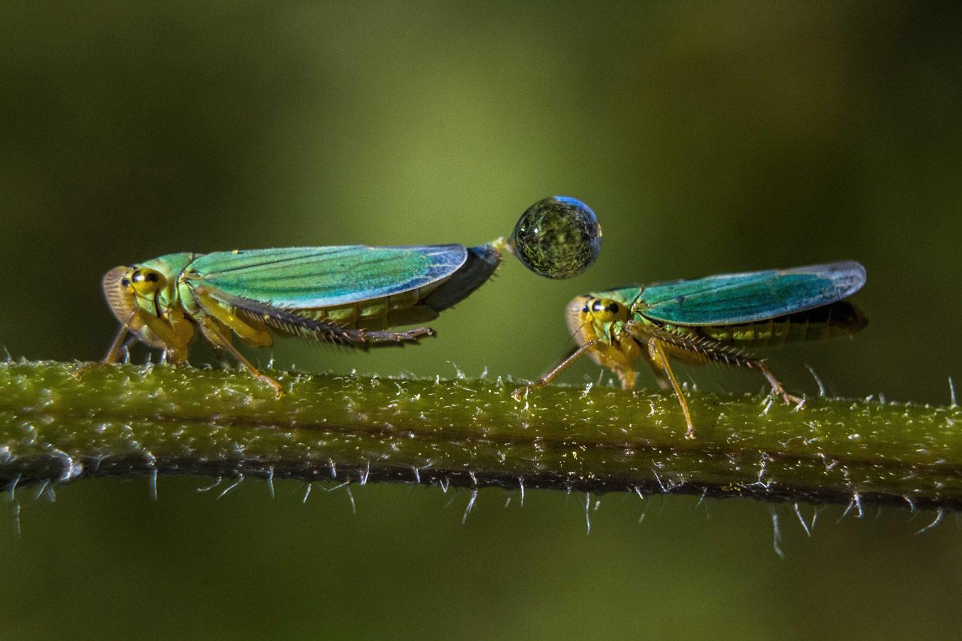Вдвоём веселей..., © Владислав Захаревич, 3-е место в номинации «Макросъёмка», Фотоконкурс «Дикая природа России» от National Geographic