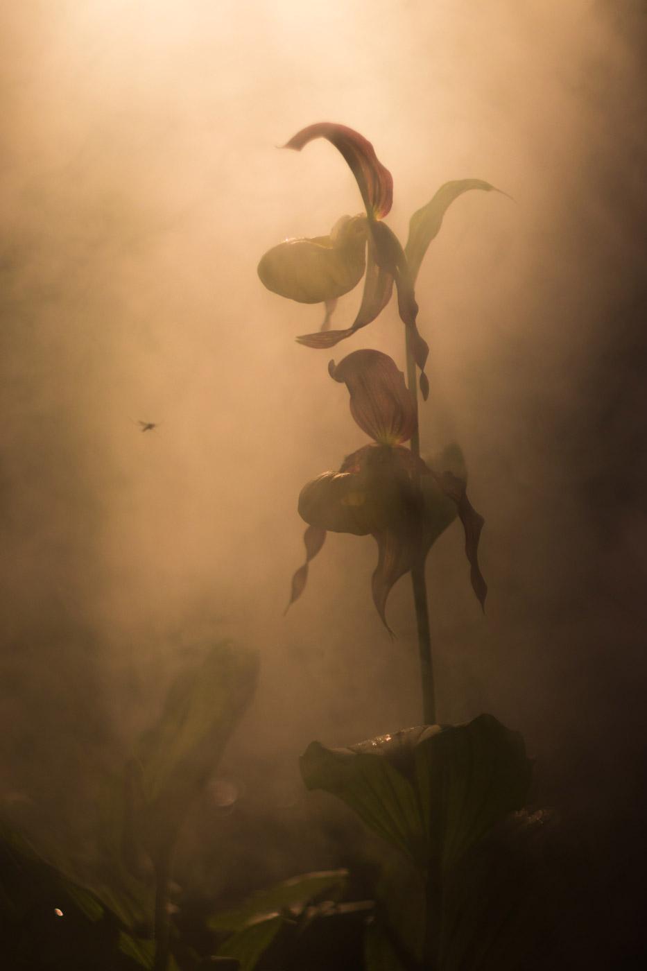 Тишина, © Андрей Кузнецов, 1-е место в номинации «Растения», Фотоконкурс «Дикая природа России» от National Geographic