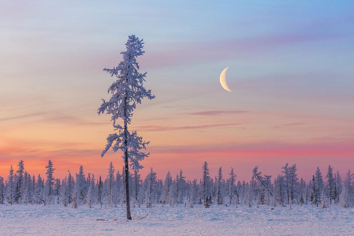 В морозном оцепенении, © Кирилл Уютнов, 2-е место в номинации «От заката до рассвета», Фотоконкурс «Дикая природа России» от National Geographic