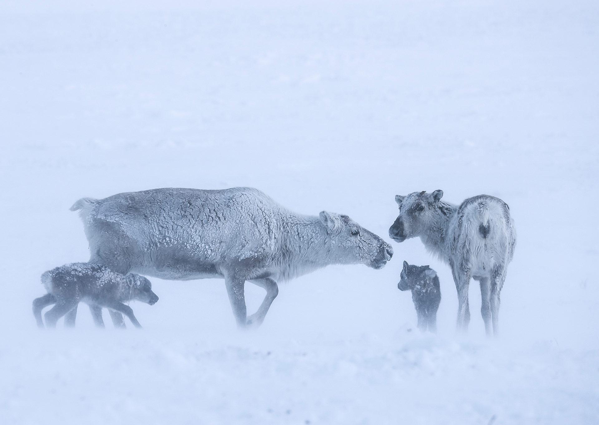 Новорождённые, © Владислав Костылев, 2-е место в номинации «Мамы и детёныши», Фотоконкурс «Дикая природа России» от National Geographic