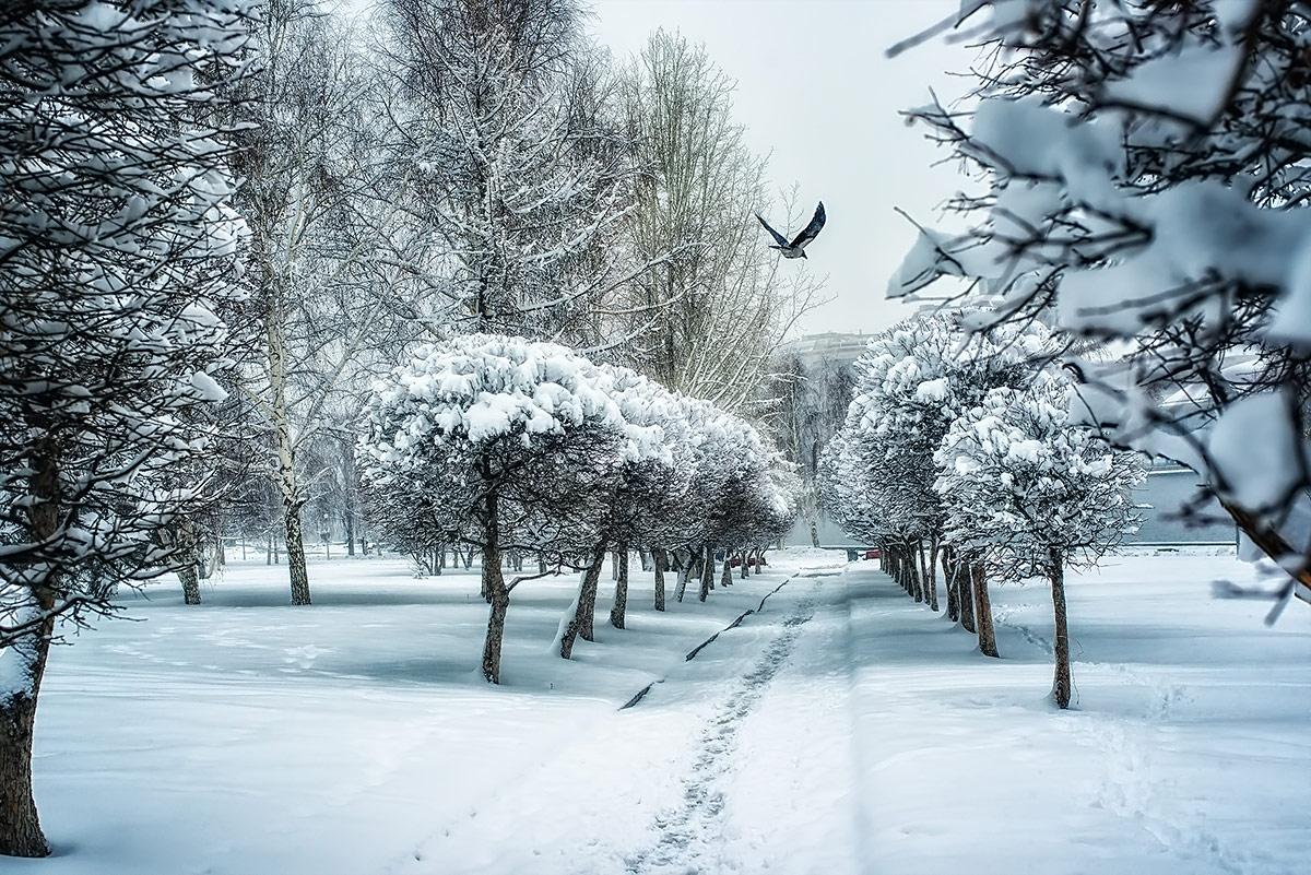 Городская сказка, © Андрей Ревякин, 2-е место в номинации «Городские джунгли», Фотоконкурс «Дикая природа России» от National Geographic