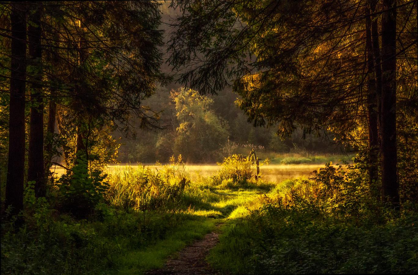 Лесная тропинка к озеру, © Евгения Ботова, 3-е место в номинации «Юные таланты», Фотоконкурс «Дикая природа России» от National Geographic