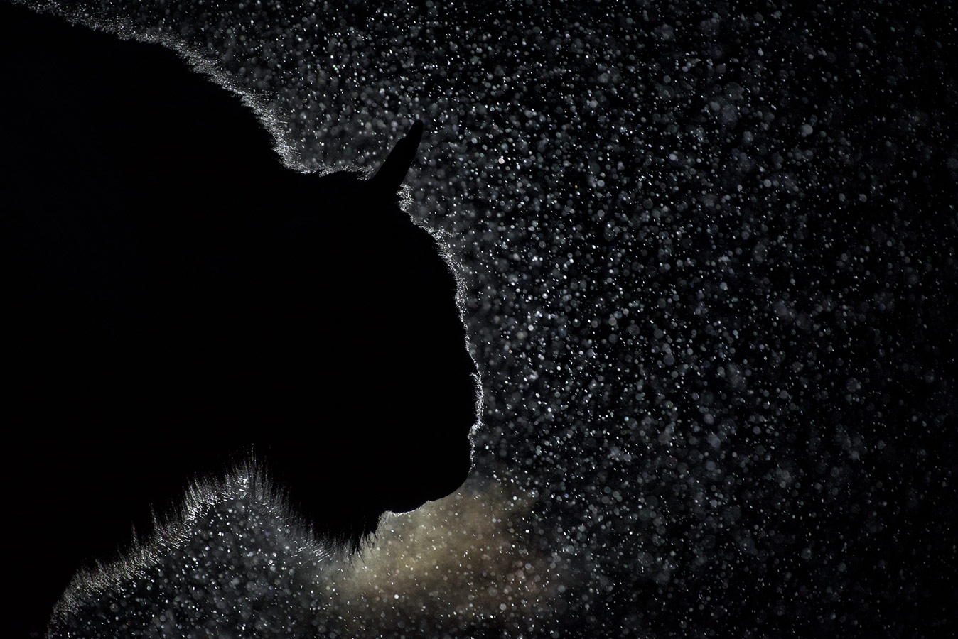 Ночной гость, © Игорь Зубков, 1-е место в номинации «Искусство в природе», Фотоконкурс «Дикая природа России» от National Geographic