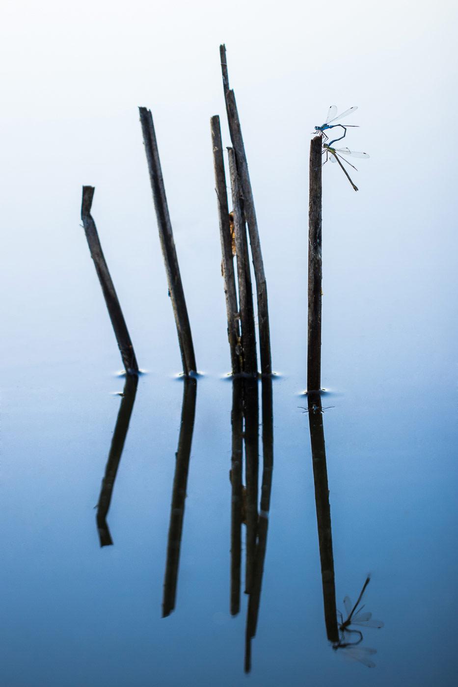 Утренняя гимнастика, © Андрей Кузнецов, 3-е место в номинации «Искусство в природе», Фотоконкурс «Дикая природа России» от National Geographic