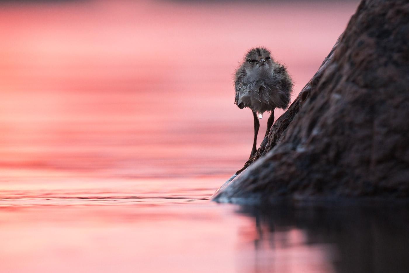 На рассвете, © Светлана Байбекова, 1-е место в номинации «Птицы», Фотоконкурс «Дикая природа России» от National Geographic