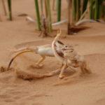 Территориальный конфликт, © Виктор Тяхт, Победитель в номинации «Фотоистория», Фотоконкурс «Дикая природа России» от National Geographic