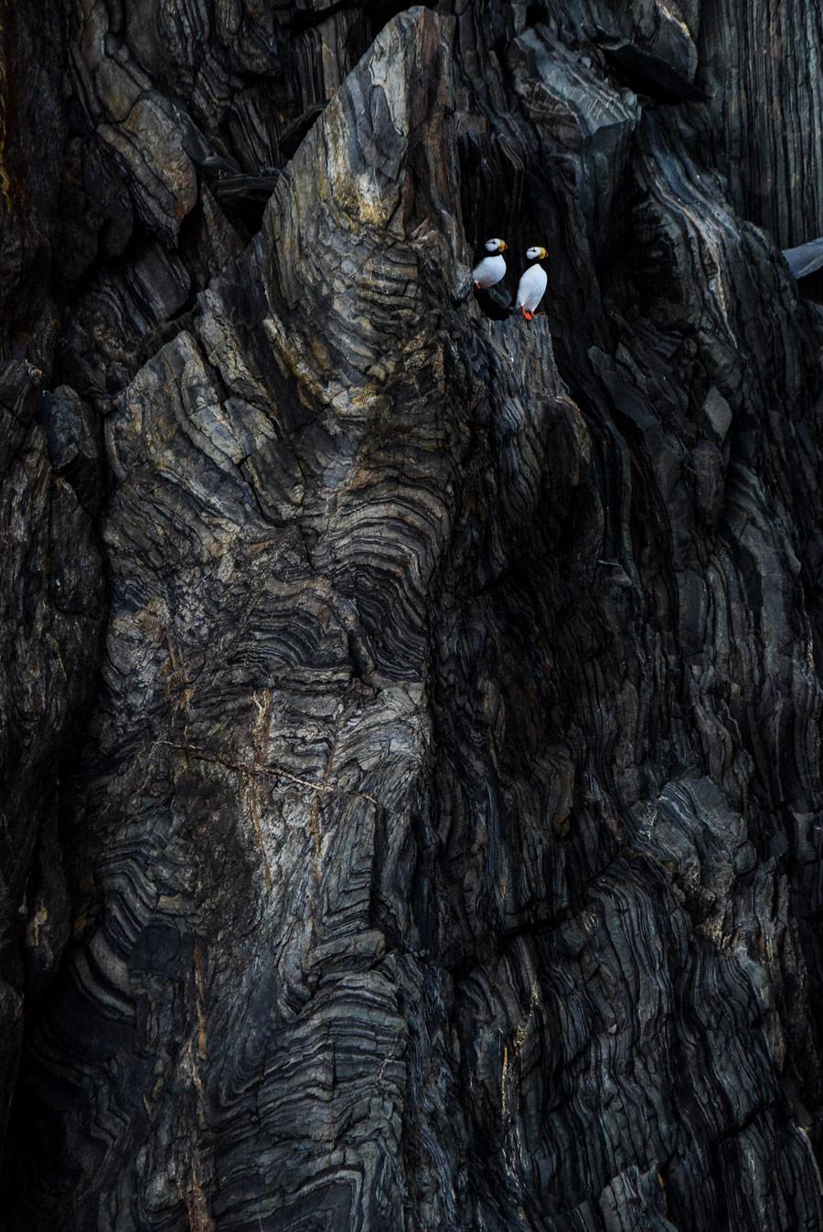 Прошлое и настоящее, © Григорий Цидулко, 2-е место в номинации «Птицы», Фотоконкурс «Дикая природа России» от National Geographic