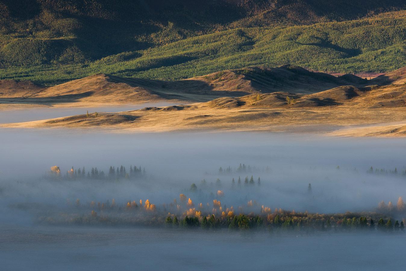 Белое на золотом, © Александр Рябенький, 2-е место в номинации «Пейзажи», Фотоконкурс «Дикая природа России» от National Geographic