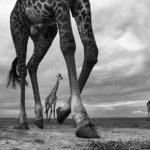 © Ануп Шах, Кения, Мара, Третье место