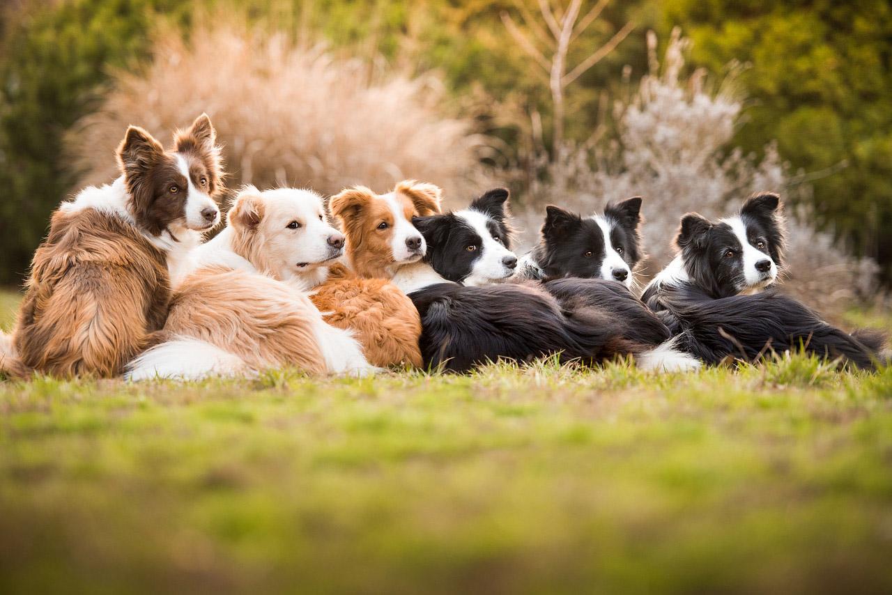 Одно сердце, одна семья, © Тамара Кедвес, Венгрия, Победитель категории «Я люблю собак, потому что...» (для детей 12-17 лет), Фотоконкурс собак — Dog Photographer of the Year
