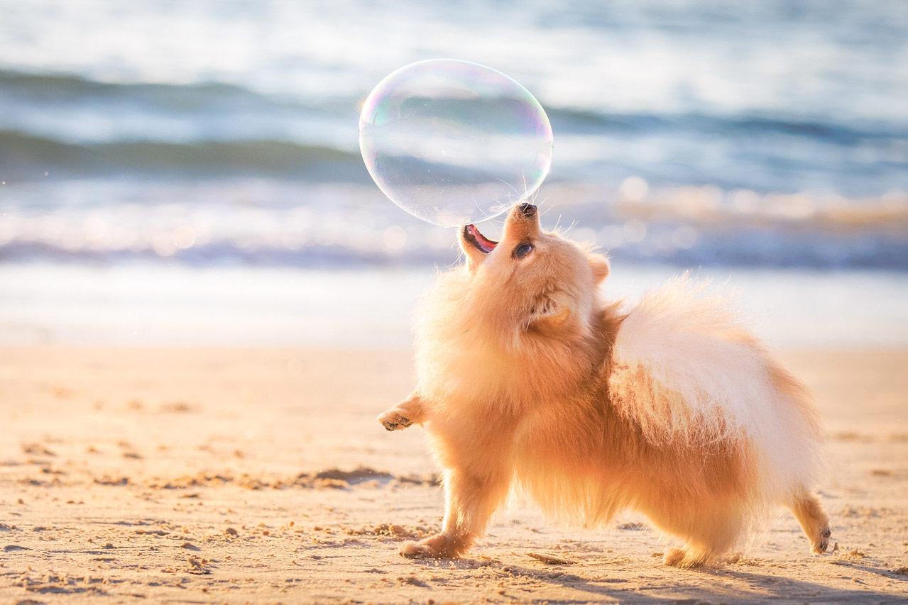 Я тебя поймаю, © Элинор Ройзман, Израиль, Победитель категории «Собаки в игре», Фотоконкурс собак — Dog Photographer of the Year