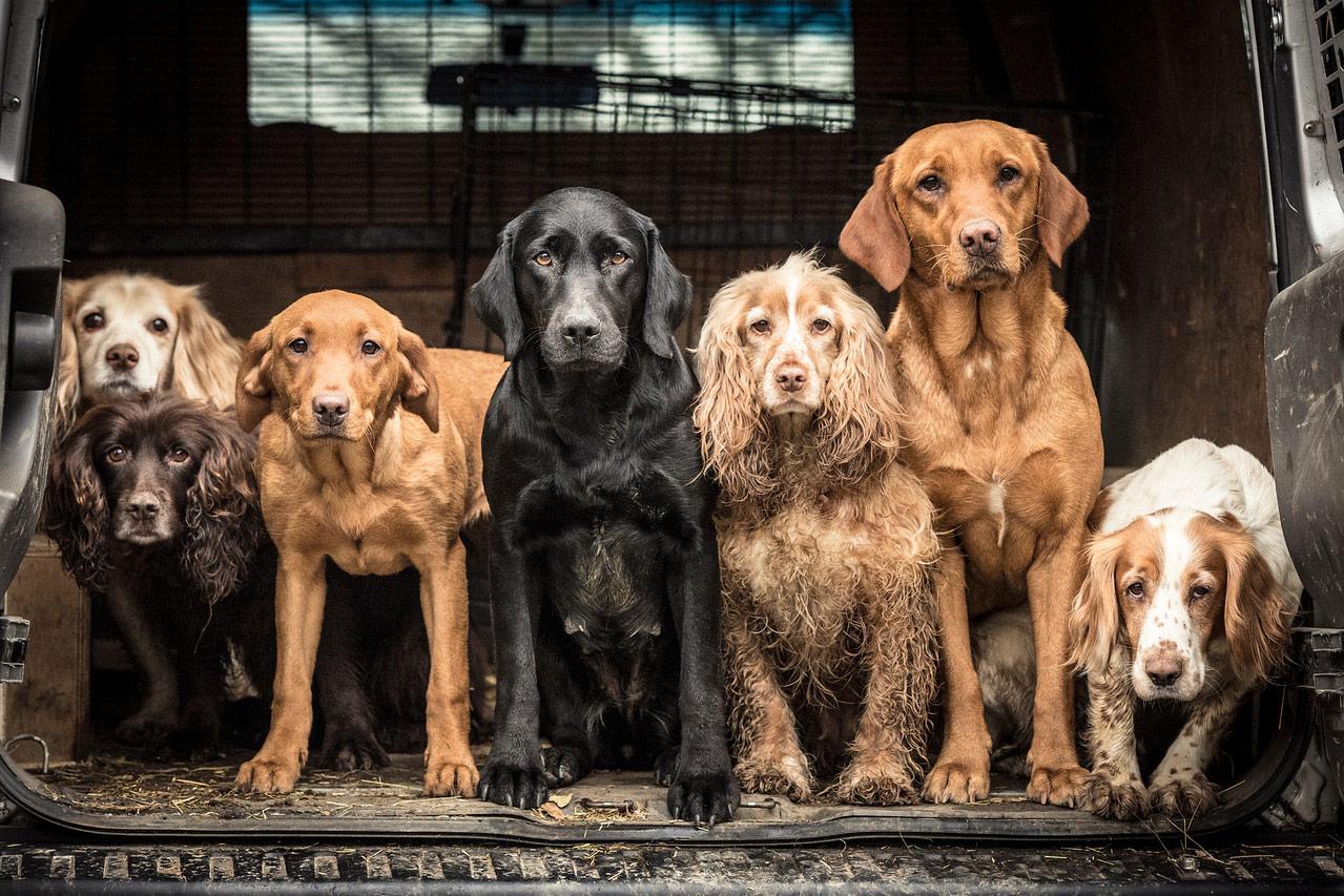 Команда Уэйна, © Трейси Кидд, Великобритания, Победитель категории «Собаки на работе», Фотоконкурс собак — Dog Photographer of the Year
