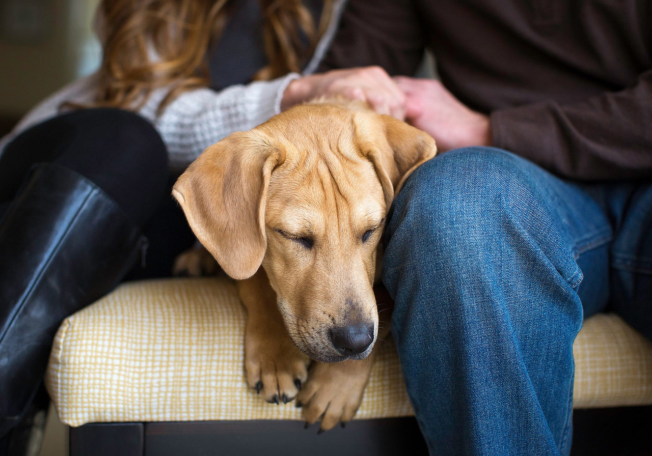 Нашёл дорогу домой, © Соня Колб, США, Победитель категории «Спасение собак», Фотоконкурс собак — Dog Photographer of the Year