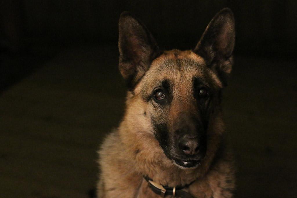 Мой лучший друг Рокси, © Мэрайя Мобли, США, 11 лет, Победитель категории «Юный фотограф» (для детей от 11 лет и младше), Фотоконкурс собак — Dog Photographer of the Year