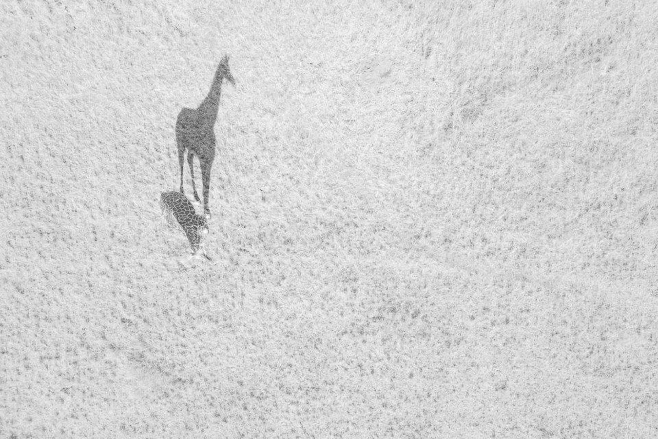 Большая тень, © Томас Виджаян, Второе место, Конкурс фотографий с дрона DrAw