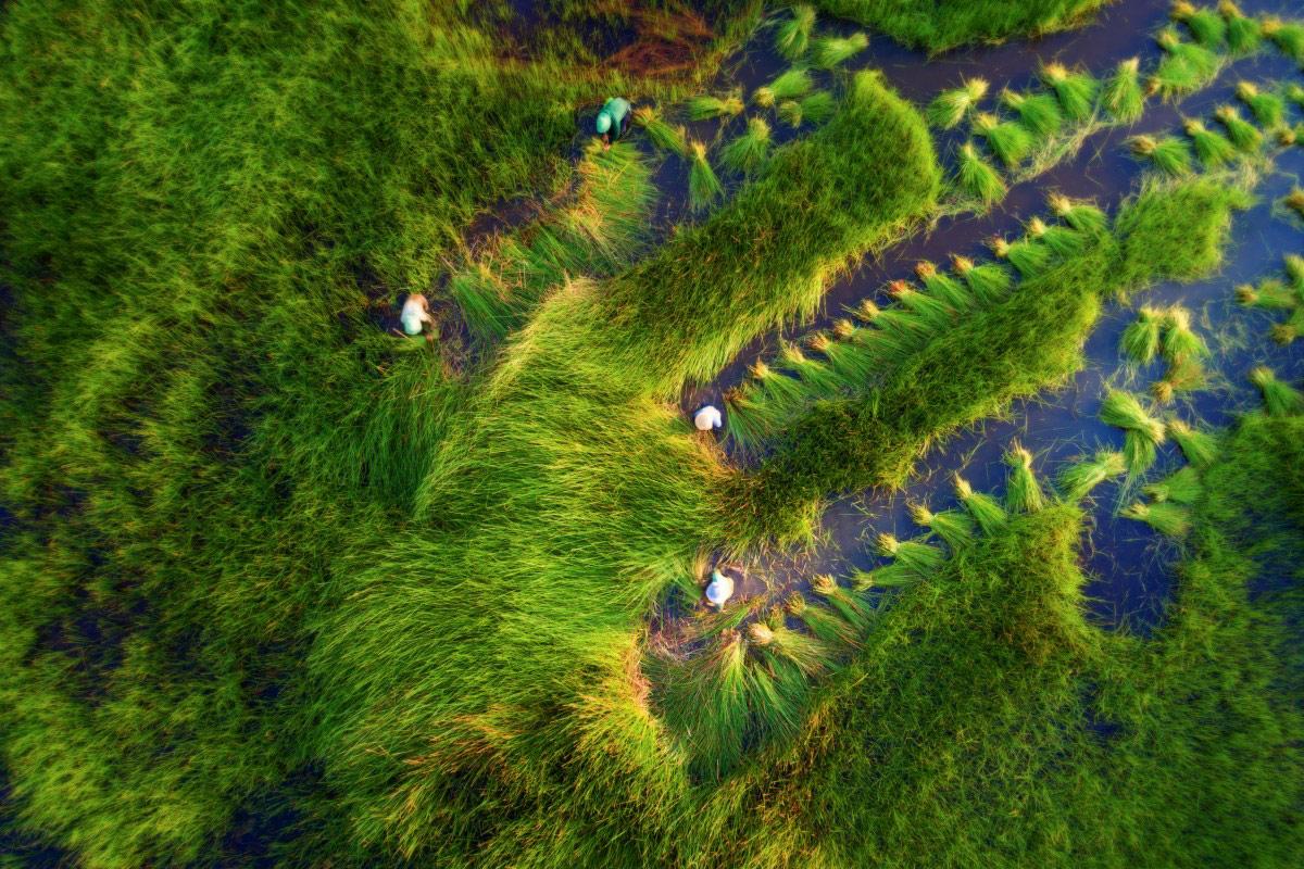 Сбор урожая, © Туан Нгуен, Конкурс фотографий с дрона Dronestagram