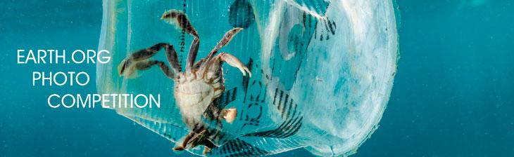 Международный конкурс фотографии дикой природы Earth.Org 2022