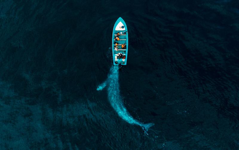 Джозеф Чейрес, Серый кит