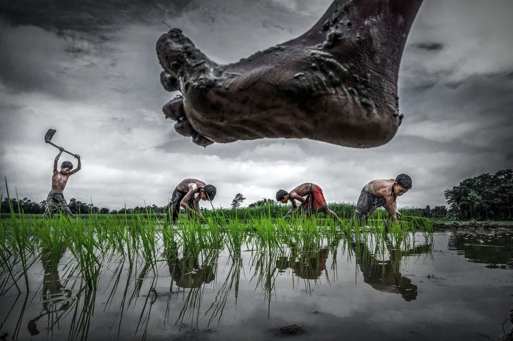 © Суян Саркар / Sujan Sarkar, Финалист конкурса, Фотоконкурс Environmental Photographer of the Year