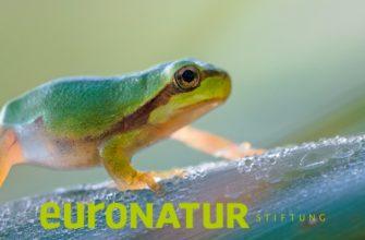 Фотоконкурс «Сокровища природы» — EuroNatur