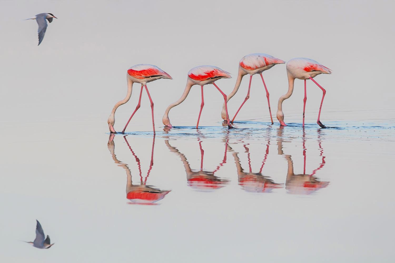Идеальная гармония, © Раймунд Брандштеттер, 1 место, Фотоконкурс «Природные сокровища Европы» — Europe's Natural Treasures