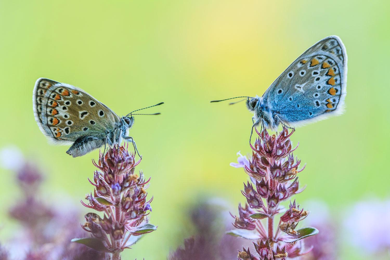 Нежный момент, © Раймунд Брандштеттер, 8 место, Фотоконкурс «Природные сокровища Европы» — Europe's Natural Treasures