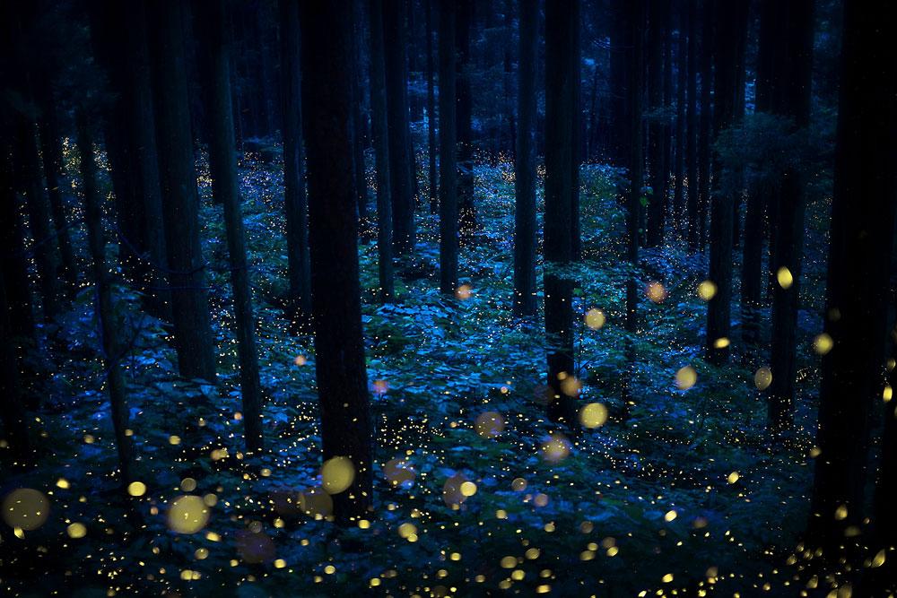 Летние феи, автор Кадзуаки Косеки, Япония