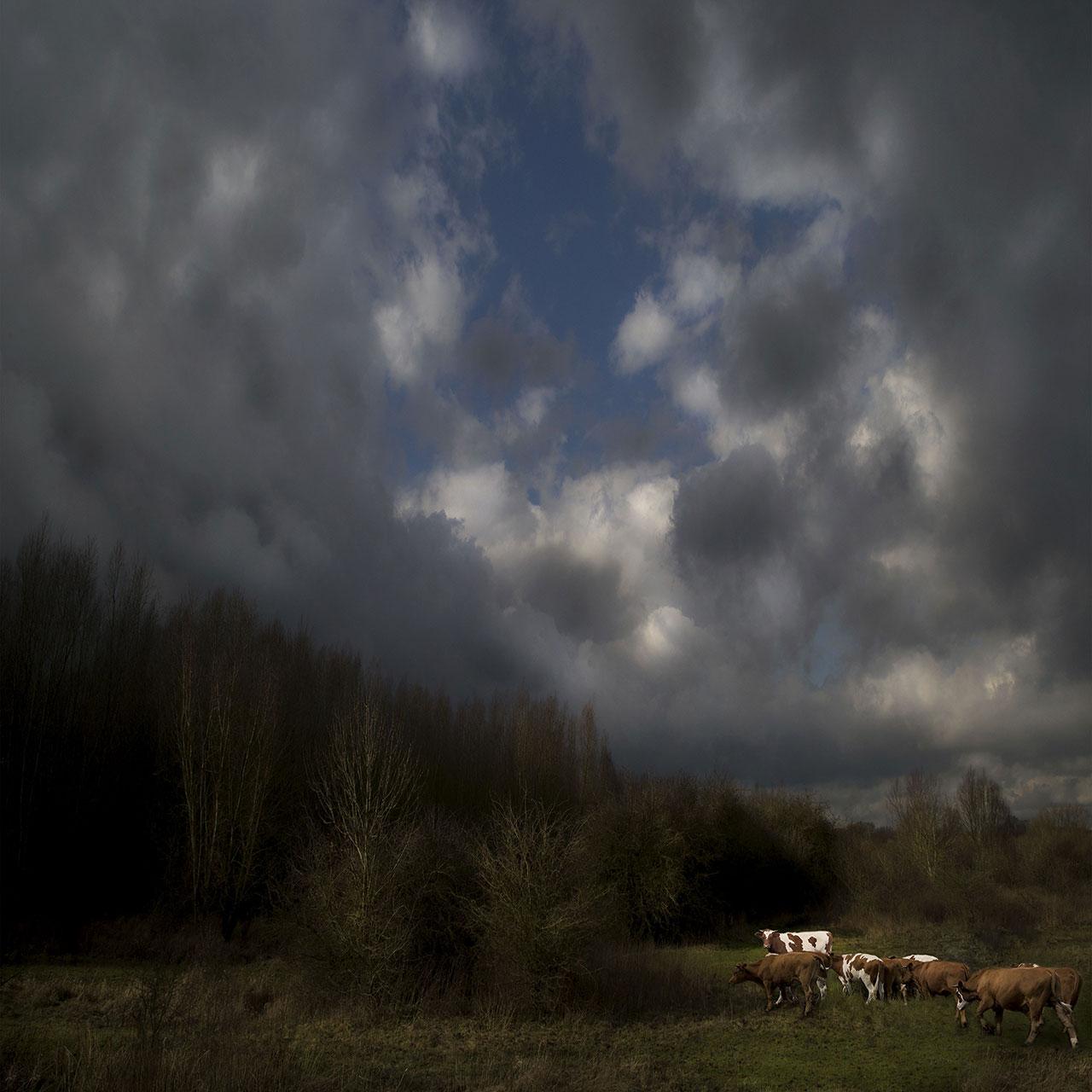 Голландский пейзаж, © Саскиа Боелсамс, Ньив-Схонебек, Нидерланды, Победитель категории «Пейзаж / Природа», Фотоконкурс Felix Schoeller