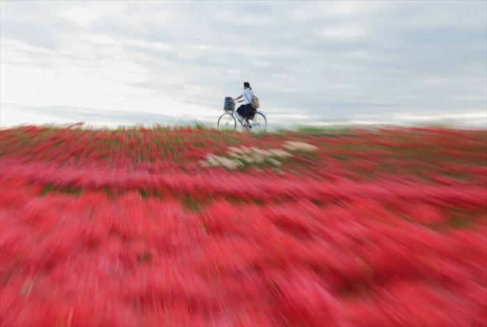 © Коджи Итами, Япония, Фотоконкурс «Фильтр» — Filter