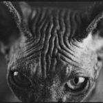 Бастет, © Дамиан Оганесян, Победитель категории «Изобразительное искусство» (профессионал), Фотоконкурс Fine Art
