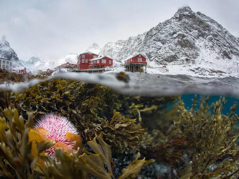 Подводный вид на зимний Лофотен, © Сергей Луканкин, Победитель категории «Природа» (профессионал), Фотоконкурс Fine Art