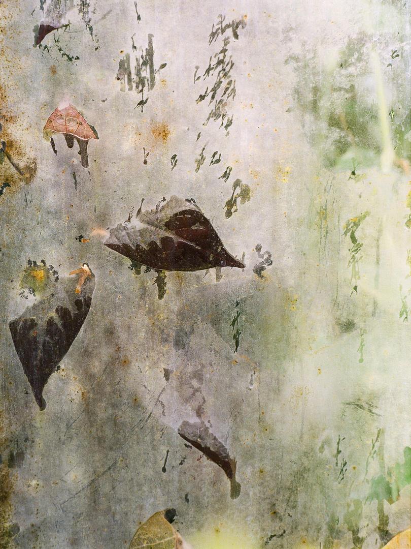 Без названия № 4, 2016 - из серии «Тропические вздохи», © Каролина Гавацци, 1 место экспертного мнения, Фотофестиваль FIX