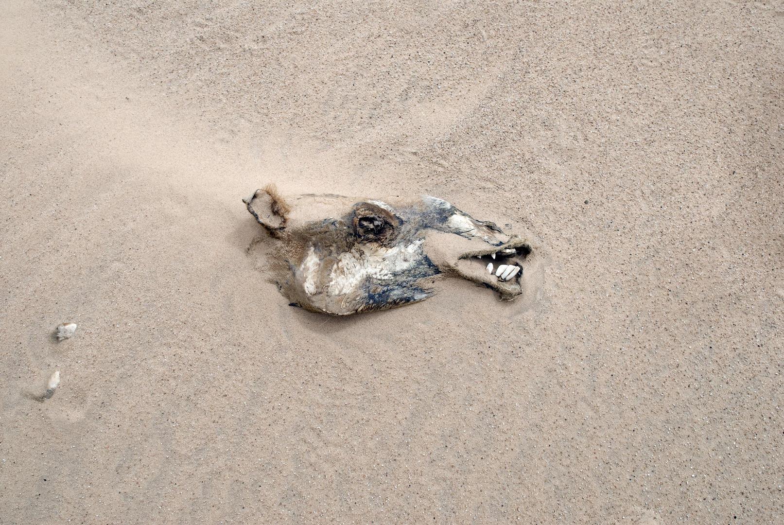 Пустынный верблюд, © Адриан Браун, 2 место экспертного мнения, Фотофестиваль FIX