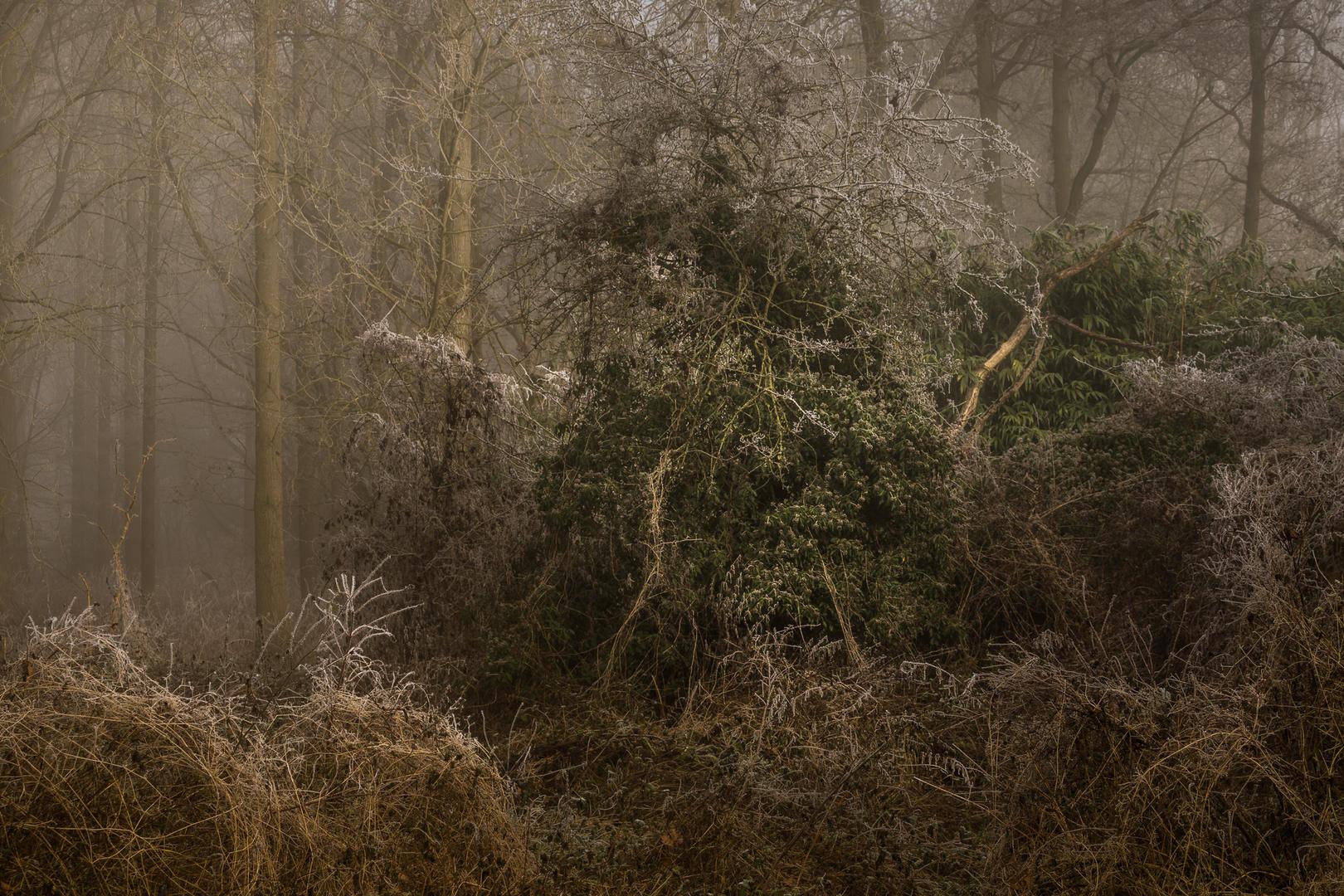 Удушение, © Ли Акастер, 3 место экспертного мнения, Фотофестиваль FIX