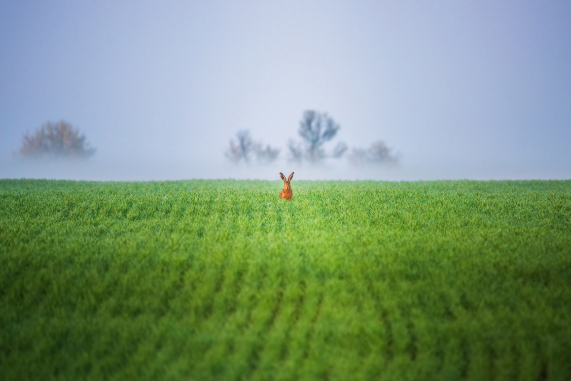© Василий Яковлев, Россия, Победитель в номинации «Чудеса животного мира», Мультимедийный конкурс «Взгляд иностранца»