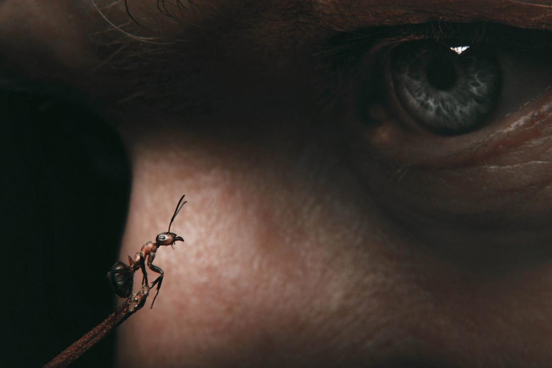 © Виктория Зыбенская, Россия, Победитель в номинации «Волшебный макромир», Мультимедийный конкурс «Взгляд иностранца»