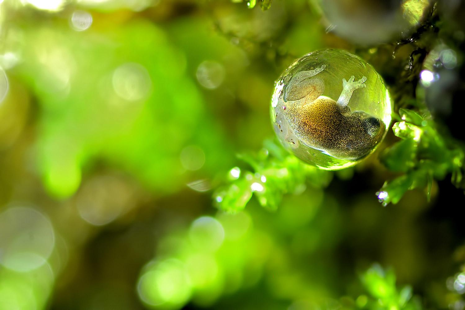 Жизнь в капле, © Анап Деодхар, Фотоконкурс «Узоры в природе»