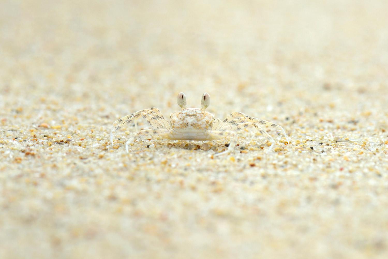 Призрачный краб, © Хавьер Эрранц Каселлас, Фотоконкурс «Узоры в природе»