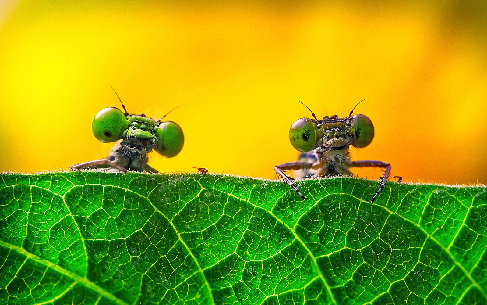 Двое с большими глазами, © Мяо Юн, Фотоконкурс «Узоры в природе»