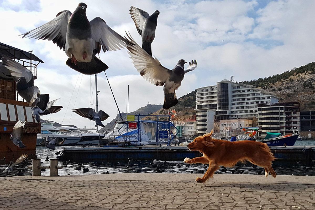 © amphre, Конкурс мобильной фотографии «Фотоохота»
