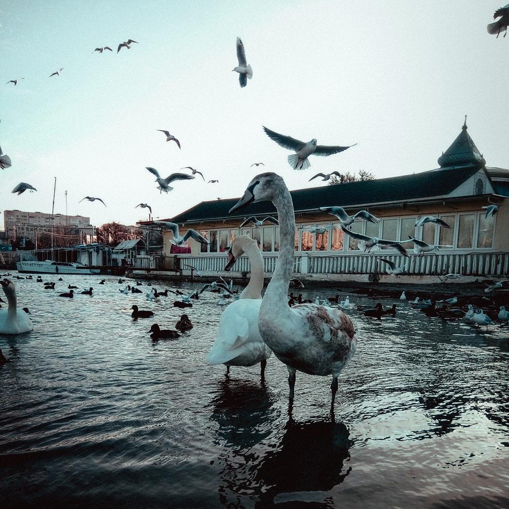 © Ринат Файзрахманов, Конкурс мобильной фотографии «Фотоохота»